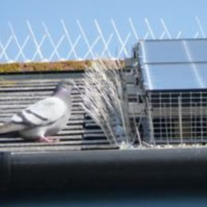 Bird Proofing