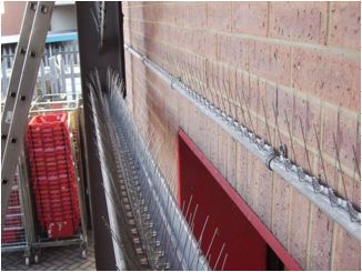 bird proofing spikes on building