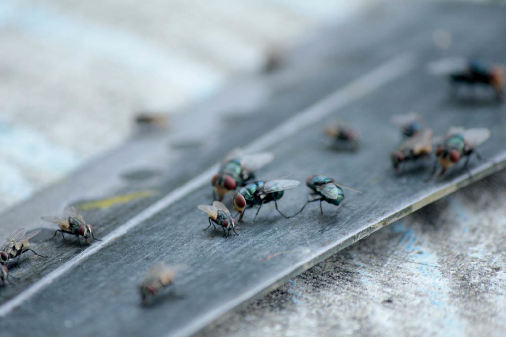flies crawling on a surface