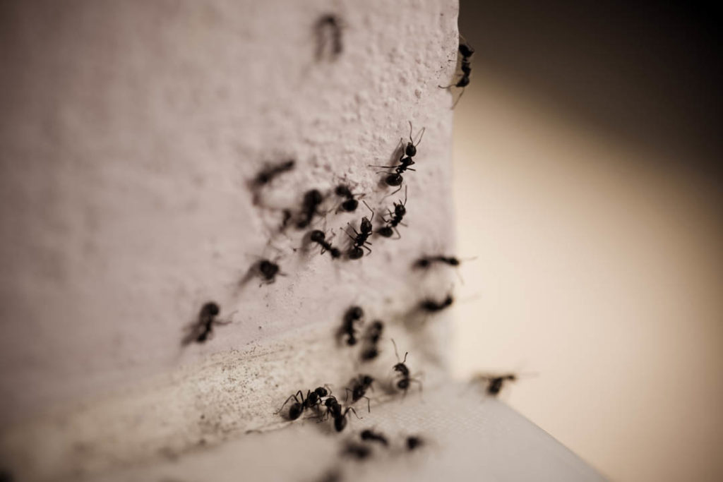 ants crawling on a house