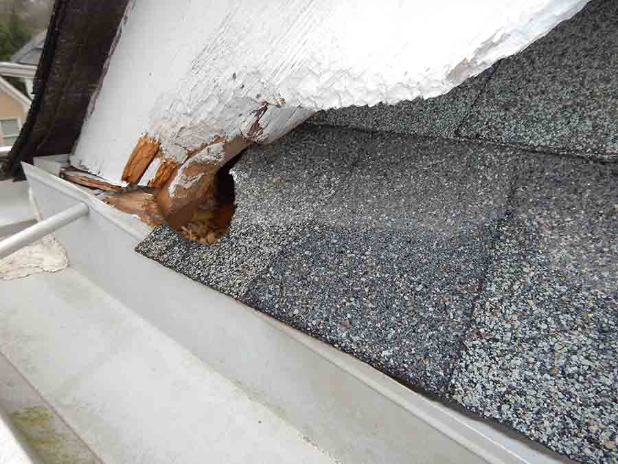 squirrel-chew-hole-in roof