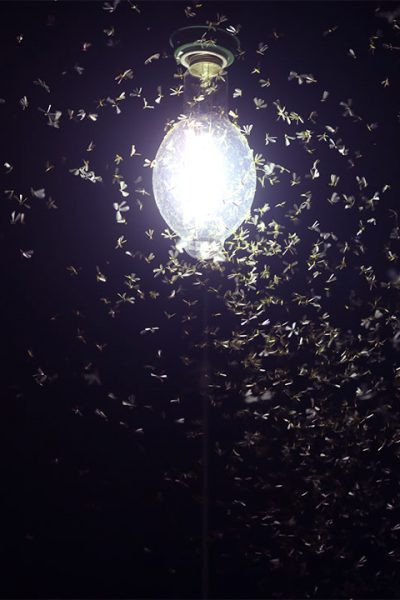 Moths buzzing around a light bulb